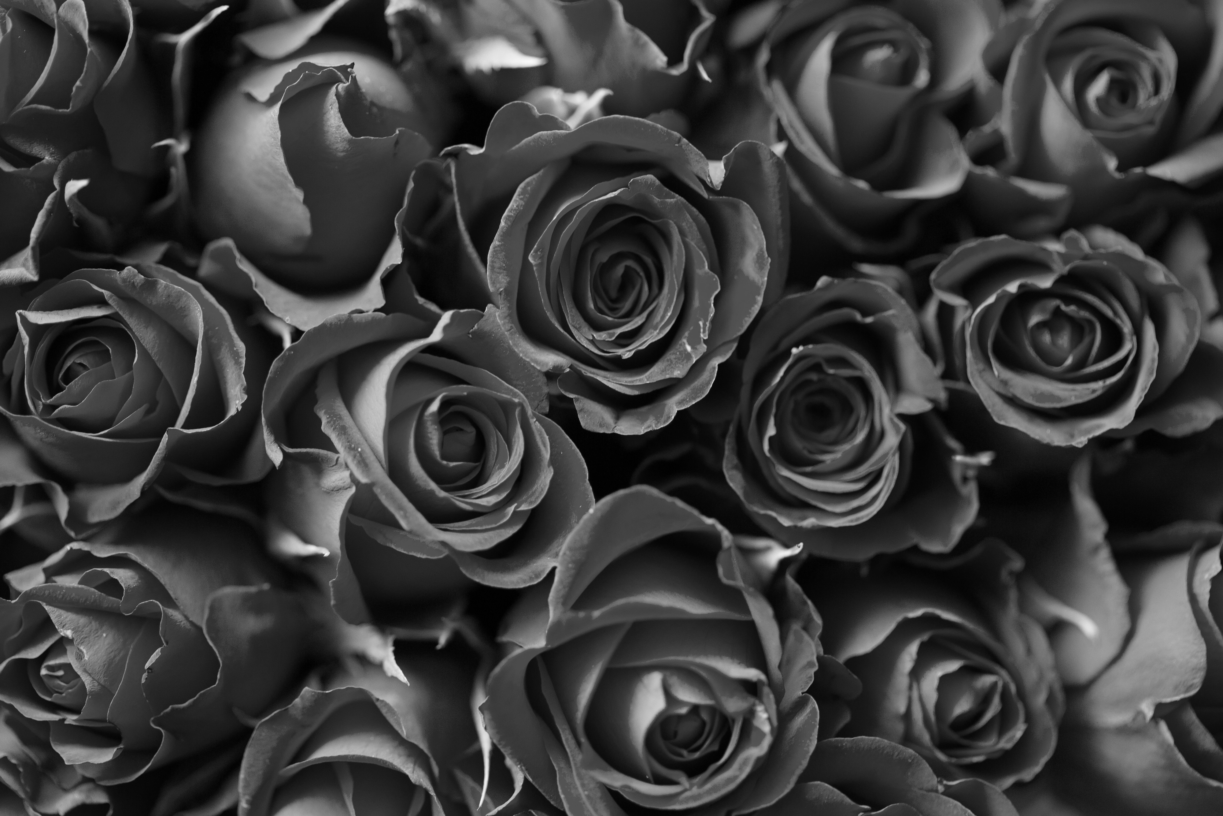 up-close bouquet of roses in black and white